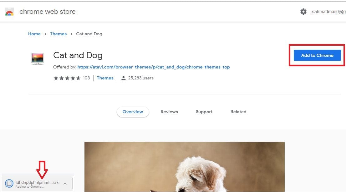 Google Chrome cats theme